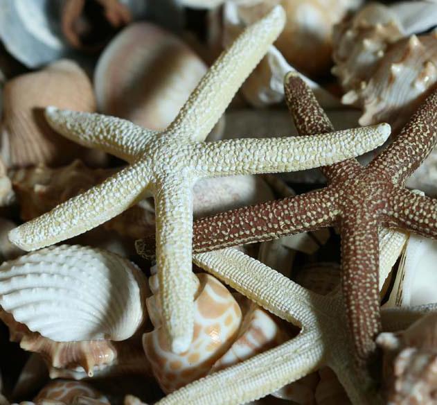 Sandplay courses devon ruth baker natural symbols